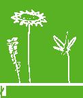ladnekwiatki